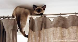 Проблема с котом - советы врачей на каждый день