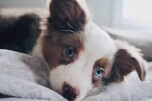 Плохо себя чувствует собака - советы врачей на каждый день