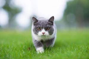 Отрыв хвоста у котенка 2 мес - советы врачей на каждый день