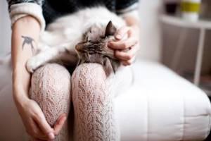 Почему у кота выделяются капли мочи - советы врачей на каждый день