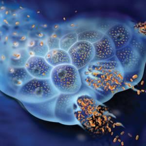 Сдал анализ на гепатит б - советы врачей на каждый день