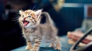 Понос у котенка - советы врачей на каждый день