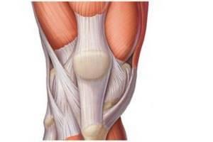 Надрыв дистального сухожилия бицепса - советы врачей на каждый день