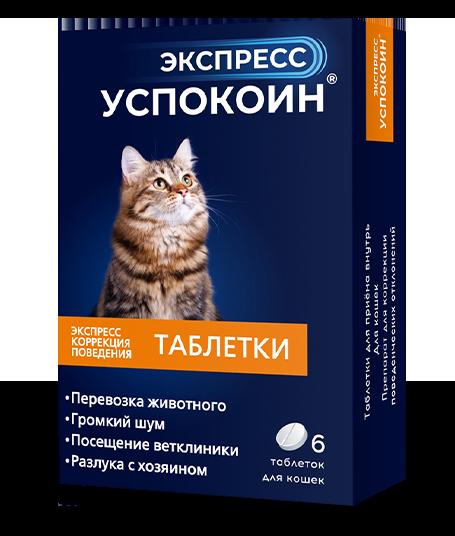 Проблемы со здоровьем у молодой кошки - советы врачей на каждый день
