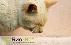 Кашель у кошки - советы врачей на каждый день