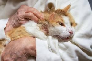 У котенка появились пятна на лапах - советы врачей на каждый день