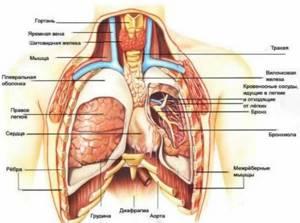 Боль в грудной клетке - советы врачей на каждый день