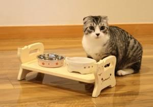 Что делать если у сиамской кошки мокнуший лишай на спинке? - советы врачей на каждый день