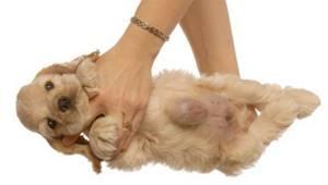 Вздулась шишка у кошечки - советы врачей на каждый день