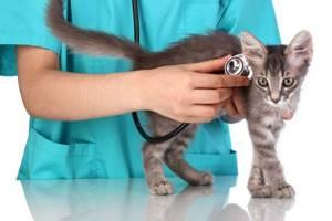 Умер кот, ребенок очень переживает, когда можно завести нового кота или м.б. собаку? - советы врачей на каждый день