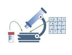 Провели исследование эякулята - советы врачей на каждый день