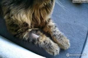 Анализ крови у кота - советы врачей на каждый день