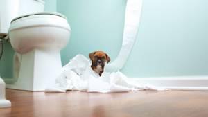 У щенка понос - советы врачей на каждый день