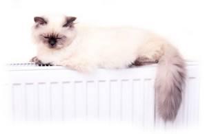 У кота выпадает шерсть - советы врачей на каждый день